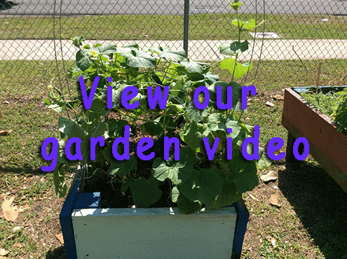 View our Community Garden video