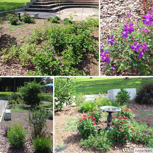 Pta Butterfly Garden
